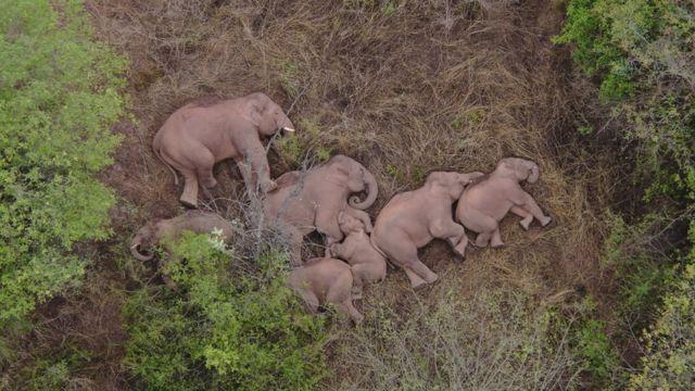 Los elefantes durmiendo