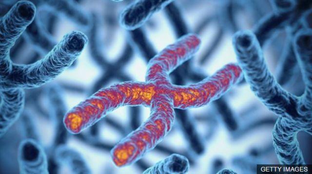 ภาพจำลองรหัสพันธุกรรม