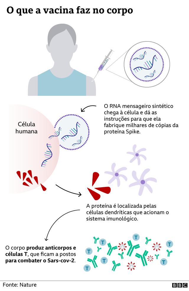 Gráfico de como a vacina age no corpo