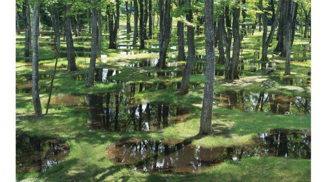 Art Biotop Water Garden