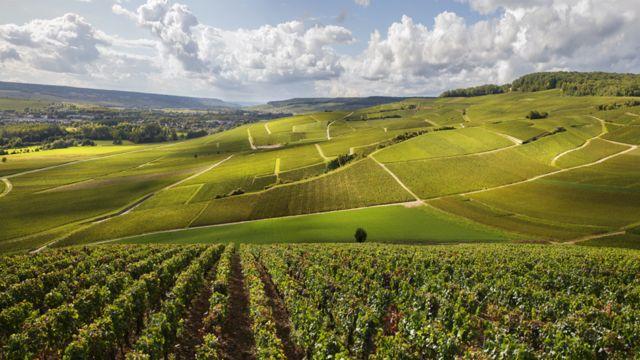 Paisagem de Champagne, na França