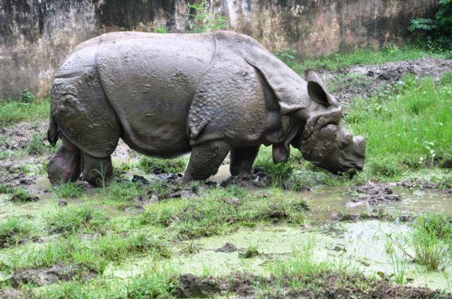 एक सींग वाले गैंडों का बसेरा है संजय गांधी जैविक उद्यान
