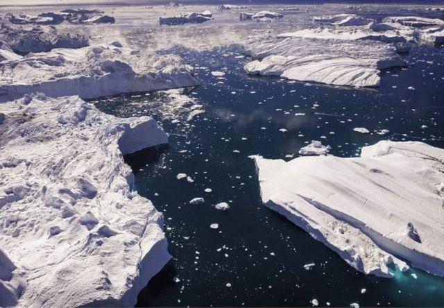 巨大的格陵蘭鯊魚能耐嚴寒的冰雪海洋。