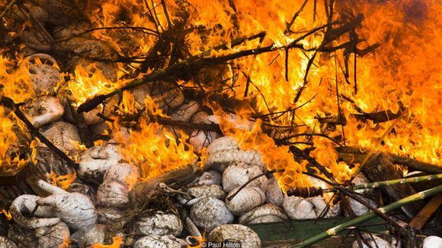 Một trong những vụ thu giữ tê tê lớn nhất từ trước tới nay, với chừng 4.000 con tê tê đông lạnh được đưa xuống hố để thiêu hủy tại Sumatra, Indonesia