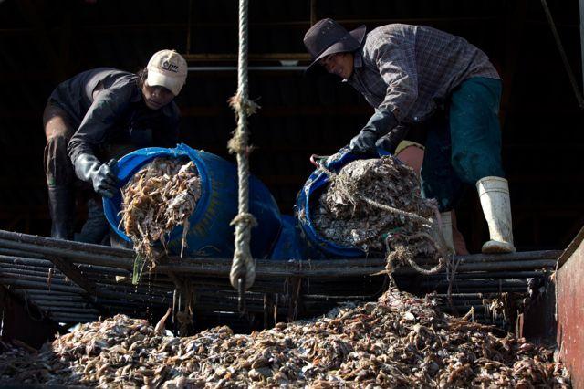 แรงงานต่างด้าวจำนวนไม่น้อยเข้ามาขายแรงงานในอุตสาหกรรมประมงของไทย