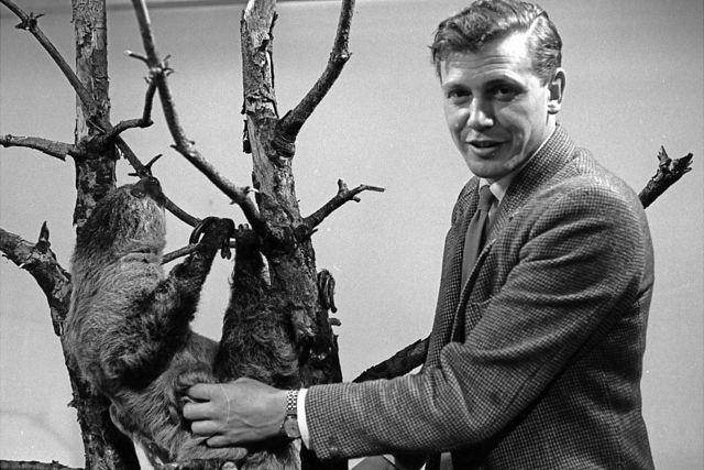 دیوید اتنبورو در کنار یک تنبل سال ۱۹۶۳