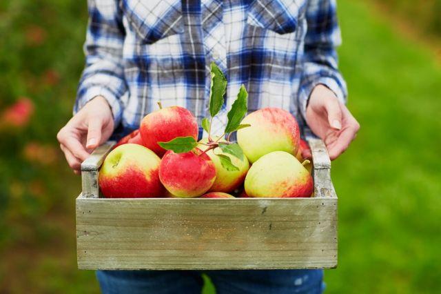 Mulher segura bandeja com maçã