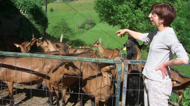 Женщина и козы