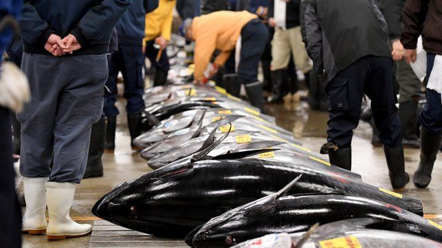 ปลาทูน่าที่ตลาดปลาญี่ปุ่น