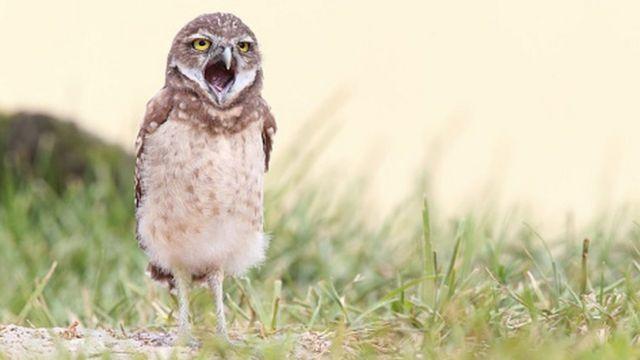 Птички тоже зевают, но делают это редко и быстро