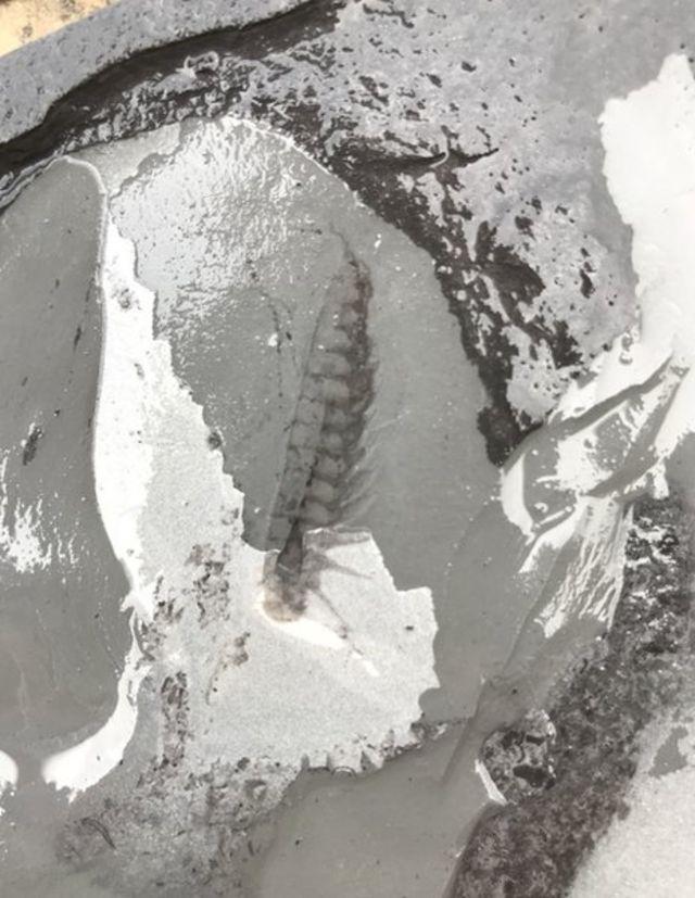 Fosili, Kina