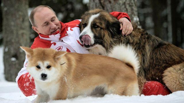 Владимир Путин и собаки