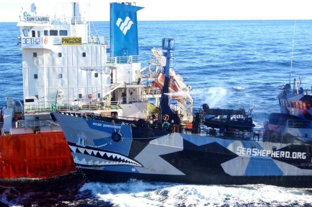 捕鯨船に体当たりする反捕鯨団体「シーシェパード」の船(2013年2月)
