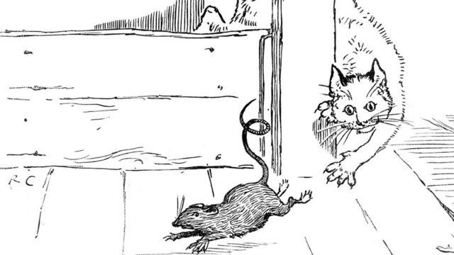 Gato tras rata