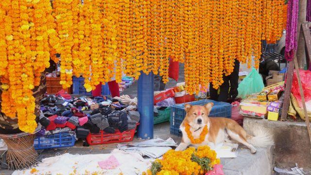 चिप्लेढुङ्गा बजारमा हिन्दुहरूको महान चाड तिहारलाई लक्षित गरी शनिवार बिक्रीका लागि राखिएका सयपत्री र मखमली माला।