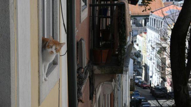Кот в окне в Лиссабоне