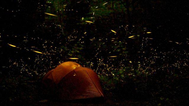 Чтобы начать свое великолепное действо, светлячки дожидаются вечера