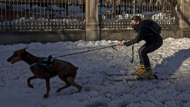 A woman on skis is pulled by her dog on a snowy street in Madrid