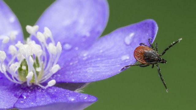Ticks emerge early in February's mild weather