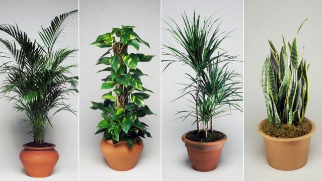 saksije sa kućnim biljem