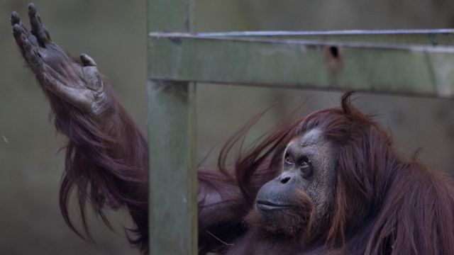 Buenos Aires to shut scandal-prone zoo