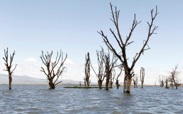 Barren trees stand waterlogged in a flooded plain.