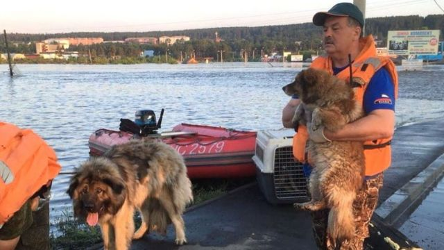 Спасатели спасают собак