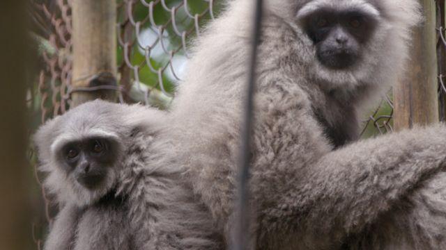 Cuplis dan anaknya, Maral, di kandang habituasi di Gunung Puntang.