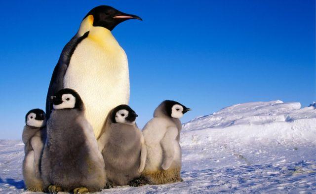 Pingüinos en la Antártida.