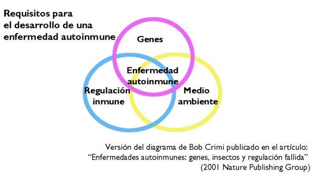 Factores que intervienen en las enfermedades autoinmunes