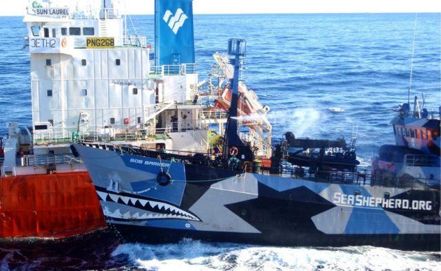 2013年には反捕鯨団体シー・シェパードの船「ボブ・パーカー」が日本の捕鯨船団に体当たりした