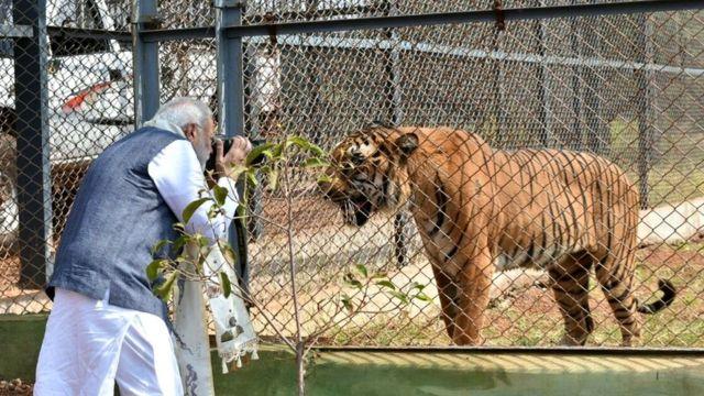 शेर की तस्वीर लेते नरेंद्र मोदी