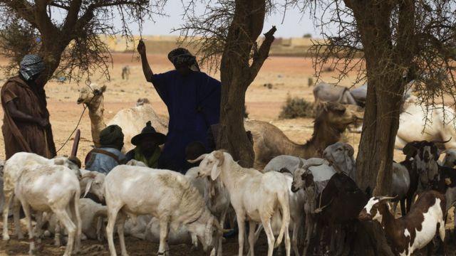 Des bergers peuls à Boré,, près de Mopti.
