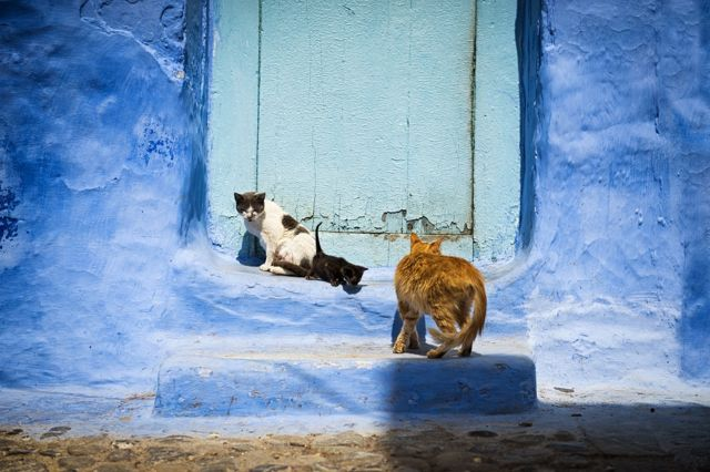 Mačke pred vratima u gradu Chefchaouen, u Maroku