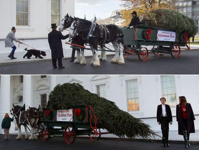 Cerimônia da chegada da árvore