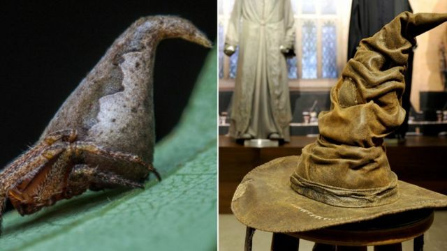 New spider species resembles Harry Potter 'Sorting Hat'
