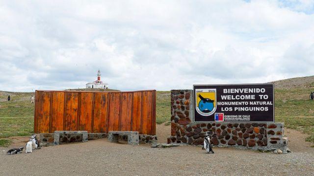 Pingüinos magallánicos