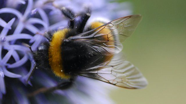 Find out which insect was voted Britain's favourite