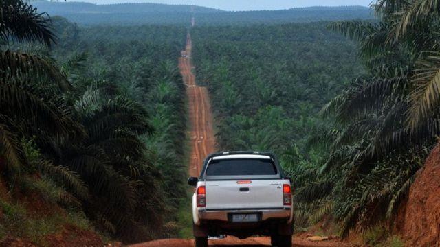 طريق للسيارات في وسط الغابة