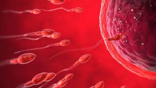Ilustración de óvulo y espermatozoides.