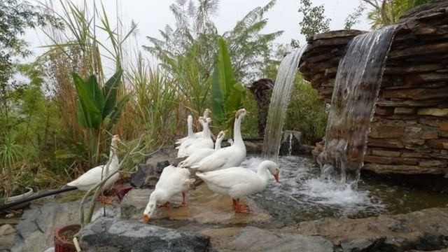 تحولت بيبلانتري من قرية جافة وجرداء إلى واحة خضراء