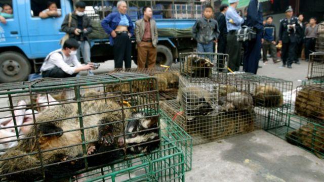 Власти изымают из продажи виверр на рынке в китайской провинции Гуанчжоу, чтобы предотвратить распространение SARS (2004)