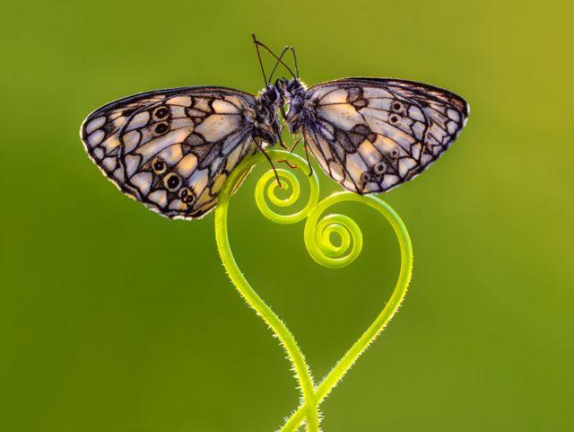 Бабочки на фоне лучей света. Все фотографии: Petar Sabol Sharpeye / REX/Shutterstock