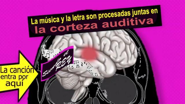 Explicación de cómo se guarda la letra de las canciones en el cerebro