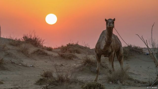 કચ્છના રણની તસવીર
