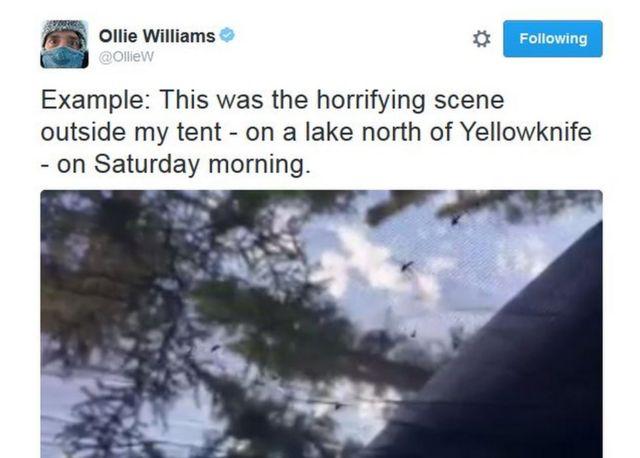 オリー・ウィリアムズ記者のツイート