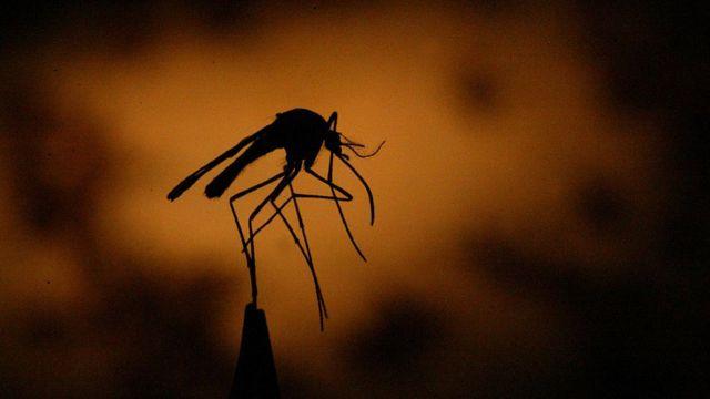 Le paludisme est transmis par les moustiques infectés.