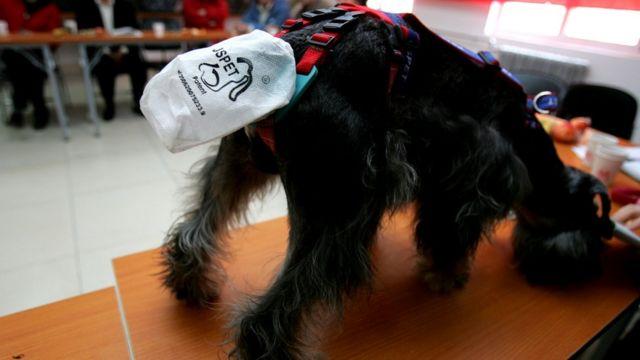 Новый бизнес порой возникает в совершенно неожиданных сферах (в Пекине демонстрировались специальные пакеты, позволяющие контролировать поведение собаки)