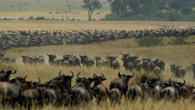 Tanzania and Kenya row over delay to wildebeest migration