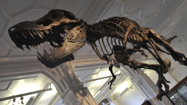 Stan T rex